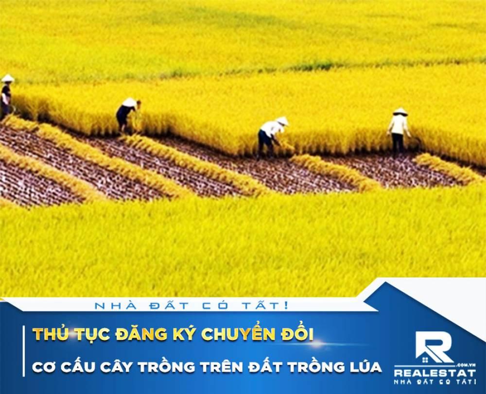 Thủ tục đăng ký chuyển đổi cơ cấu cây trồng trên đất trồng lúa